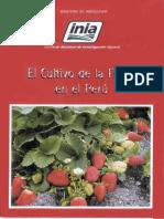 Olivera Cultivo Fresa