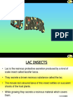 Lac Insects
