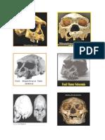 fosil manusia purba.docx