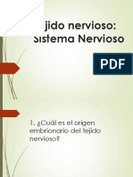 Tejido Nervioso 1