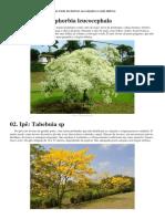 árvores calçamento.docx