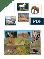 animales mamiferos FLORA y fauna.docx