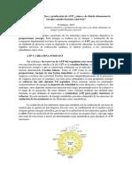Metabolismo energético y producción de ATP.docx