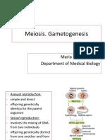 Lecture 13 Meiosis. Gametogenesis