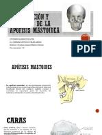 Clasificación y Anatomía de La Apófisis Mastoidea