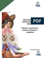 08 Solucionario Guía Células eucariontes animales y vegetales.pdf