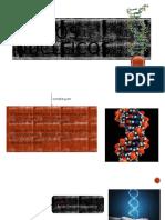 Ácidos-nucleicos.pptx