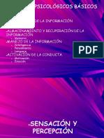 Copia de TEMA 3 - Sensación y Percepción.pdf