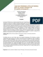 Segundo-Informe, Evaluacion de Las Dos Leyes de Mendel en Drosophila Melanogaster