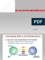 16. Regulación metabolismo