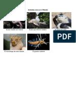 Animales raros en el Mundo.docx