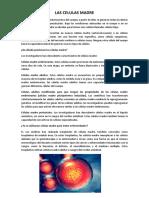 LAS CELULAS MADRE.docx