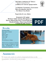 Ancylostoma y Erhliquia