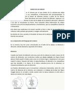 DANZA DE LAS ABEJAS.docx