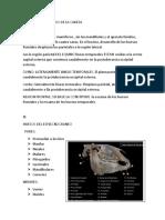 huesos_info[1].docx