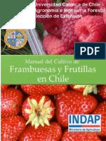 manual-de-cultivo-de-frutilla-en-chile_indap-puc-2015.pdf