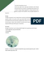 Penyakit Grup A Streptococcal.docx