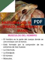 02 ANATOMIA DEL HOMBRO BRAZO MANO.pdf