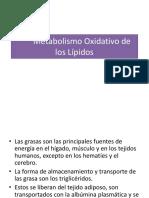 metabolismo oxidativo de los lipidos