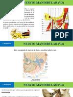 Nervio mandibular (v3)