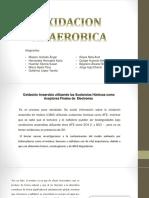 Exposicion Biorremediacion 2.0