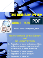 The Urinary System 2013