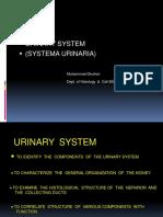 Urinary System 25 Feb 2013