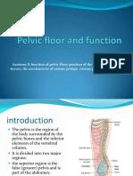 last editPelvic floor and function2013.pdf