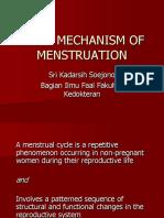 Physiology vagina