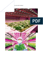 Indoor Farming Datin