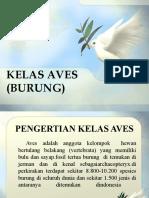 Kelas Aves (Burung)