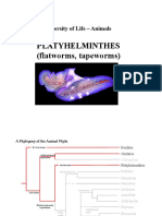 19-Platyhelminthes.pdf