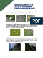 el  plástico en el Peru