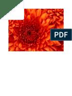 Test PDF File