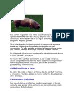 CRIA DE CERDOS.docx