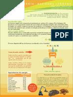 Dendroenergia.pdf