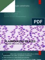 Plasmodiosis en Aves (2)