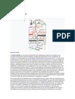 Teoría de la Evolución Celular.docx