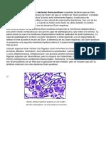 Bacteria_Gram_Positiva_y_negativa.docx
