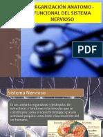 Organización Anatomo-Funcional Sistema Nervioso CADL