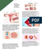 enfermedades sexuales.docx