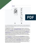 desarrollo elastomerico.docx