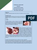 INFORME DE LABORATORIO BIOLOGIA.docx