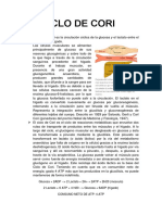 CICLO DE CORI.docx