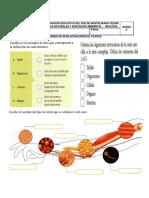 evaluación tejido