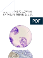 Epithelial Tissues Practice Colored Fin