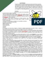 EFECTO DE LA ELECTRICIDAD.docx