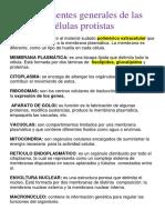 Componentes generales de las células protistas.docx