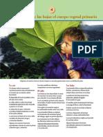 La raíz, el tallo y las hojas.pdf