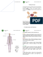 El Sistema Nervioso Materia.docx